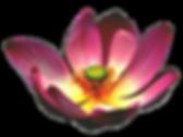 Transp lotus-545512_1280.png