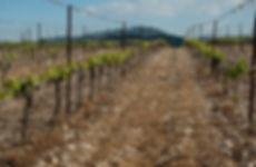 vineyard-1371348_1920.jpg