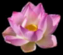 Transp lotus-3192656_1920.png