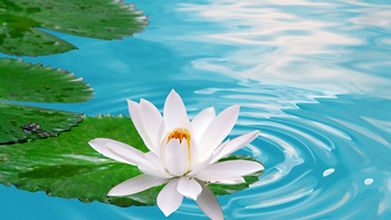 Lotus Counseling Services