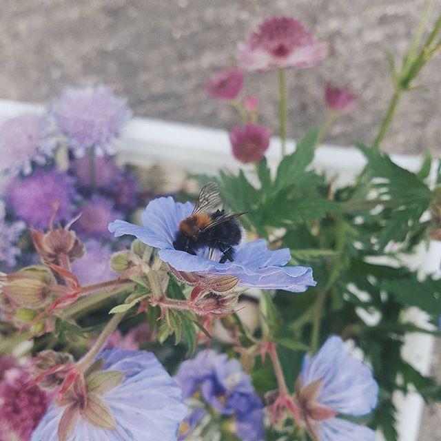 Bee-autiful  #savethebees