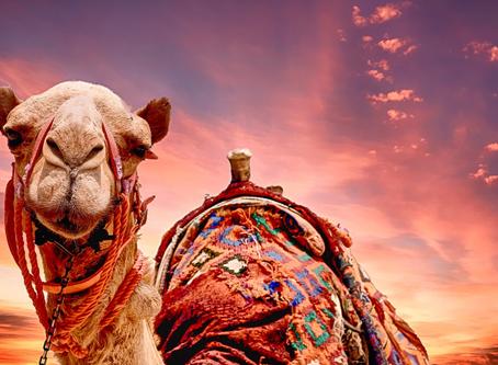 GNATS & CAMELS