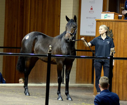 Great Success Yearling