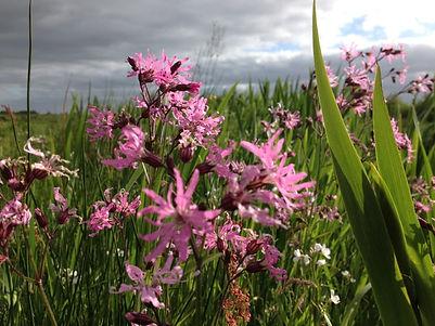 Kruidenrijk en biodivers grasland bij De Nije Mieden