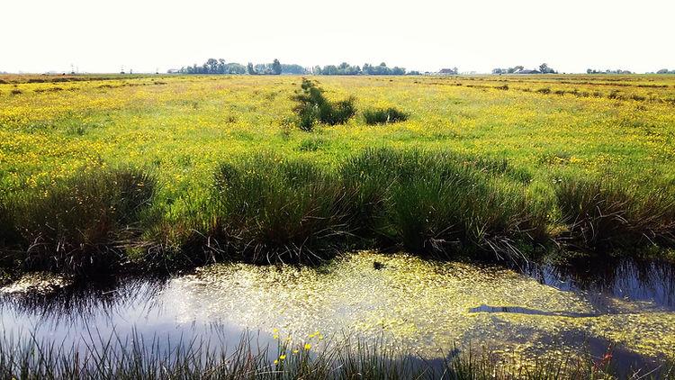 Biodivers natuurlandschap van bio-boerderij De Nije Mieden