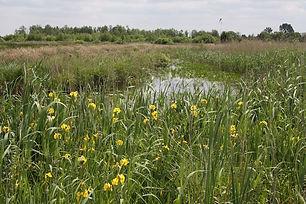 Biodiversiteit in het natuurlandschap van biologische boerderij De Nije Mieden
