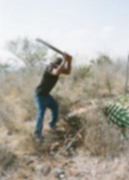Mezcal_Film_4.jpg