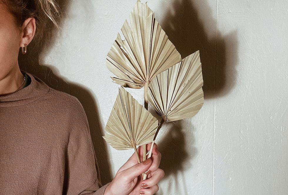Spear Palms