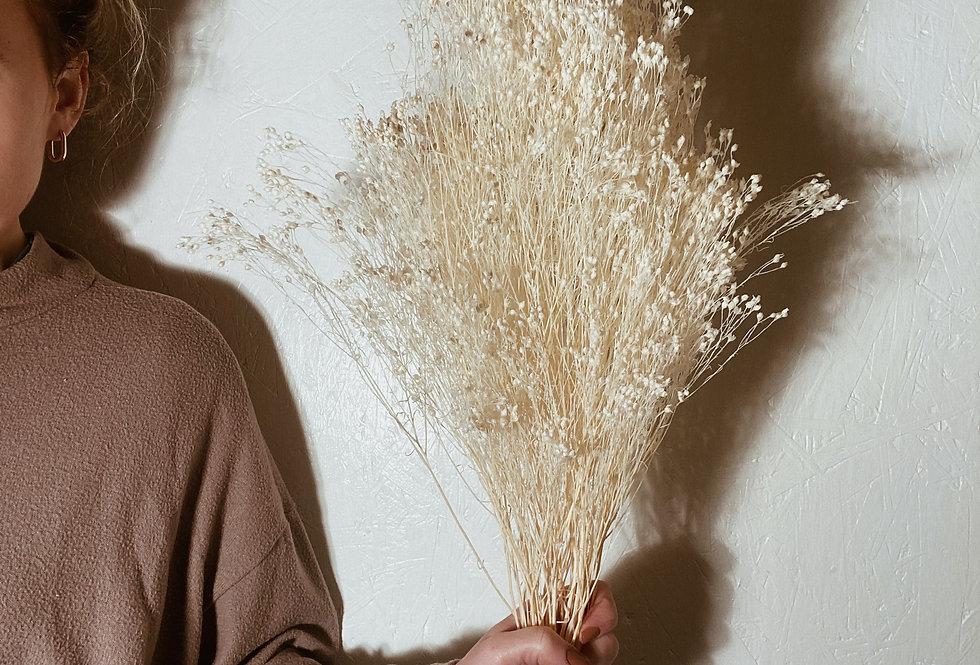 White Broom Bloom Bunch