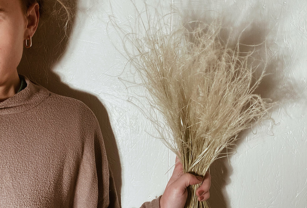Stypha Grass