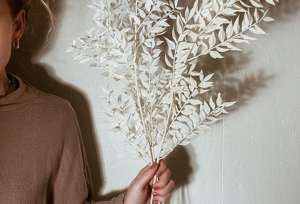 White Ruscus