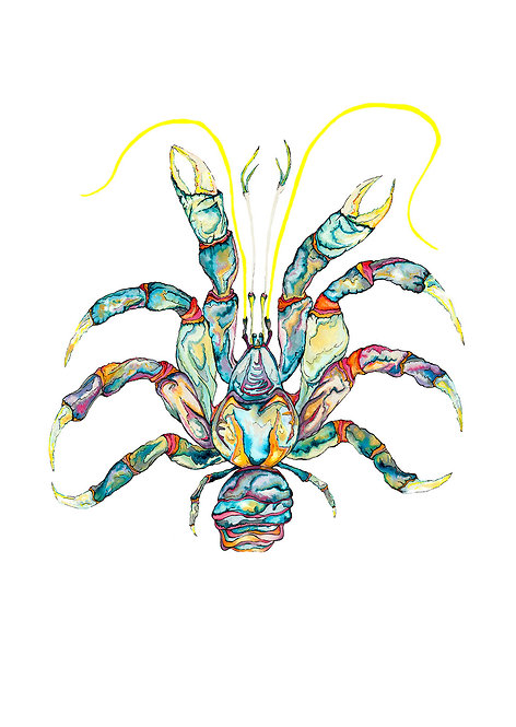 Blue Jewel Lobster