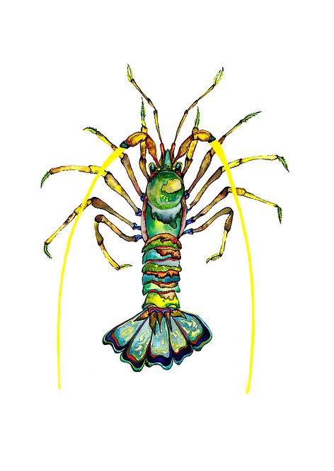 Green Jewel Crayfish