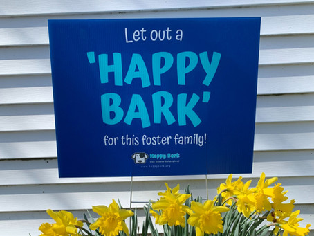Considering Fostering?  Here's Your Sign!