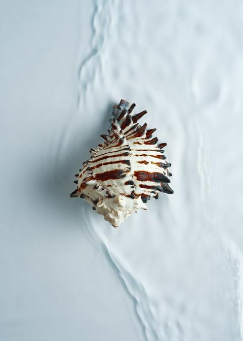 Conch I