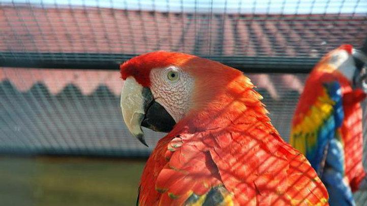 В гости к пернатым, парк птиц