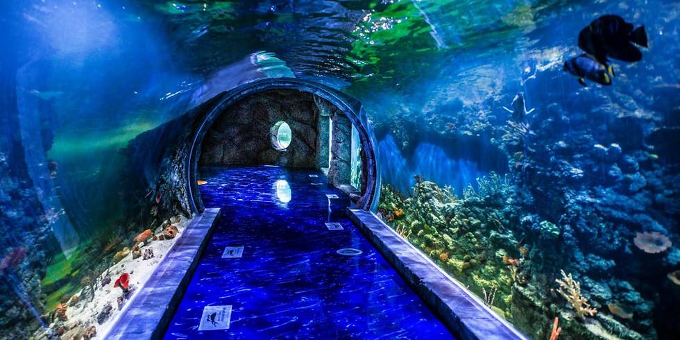 На волне приключений, экскурсия в Океанариум