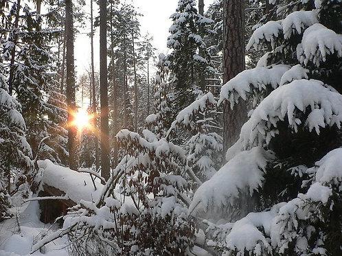 Новогодний тур в Минск и Несвижский замок.