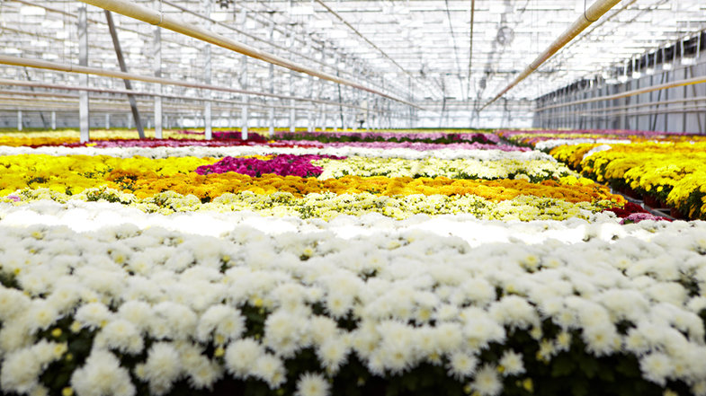 Тайны цветочной планеты, экскурсия в агрохолдинг