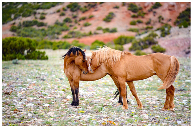 Mustang Kisses