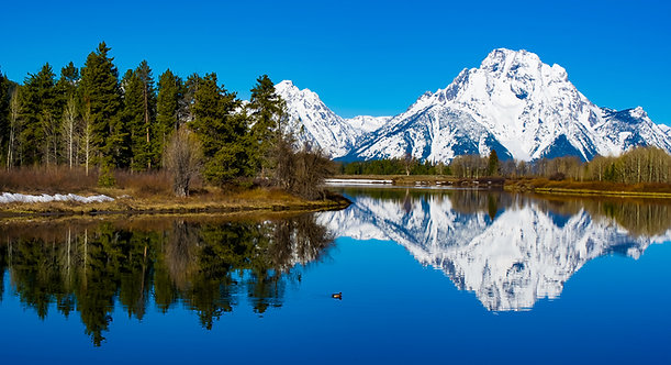 Wild Reflections