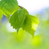 blur-branch-bright-97888.jpg