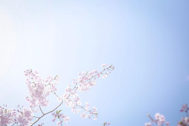 kumiko-shimizu-620197-unsplash.jpg