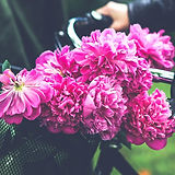 basket-beautiful-beauty-5971_edited.jpg