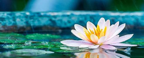 lotus+banner.jpg