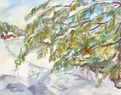 SNOWY BOUGHS.jpg