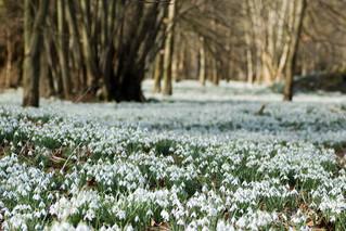 A (slight) hint of Spring