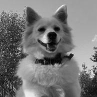Beyaz_Köpek.jpg