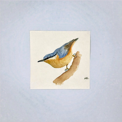 Nuthatch Watercolour