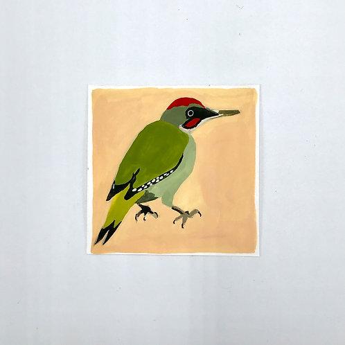 Little Green Woodpecker