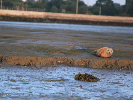 Seal Watching at Sunrise