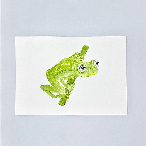 Kermit the Glass Frog