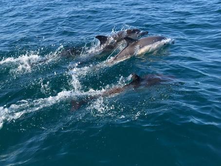 English Channel Wildlife