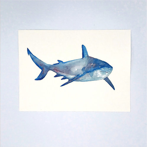 Sad Shark Watercolour