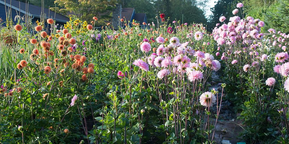 F3 Workshop Series - Picking & Designing Farm Fresh bouquets