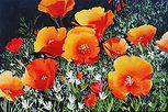 1271-poppies-96b.jpg