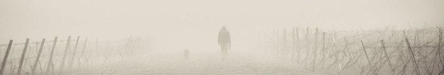 foggy3.jpg