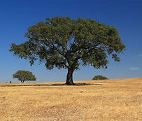 cork tree sustainability products