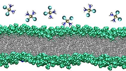pt-membrane.png