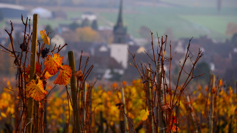 HerbstinHallau.jpg