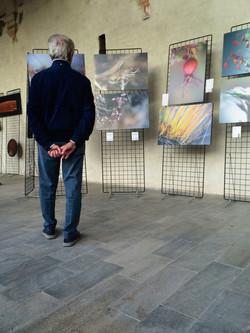 La Natura Esagera al Broletto di Novara - 7
