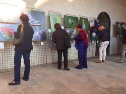 La Natura Esagera al Broletto di Novara - 4