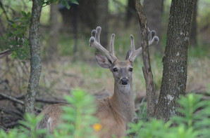 Trophy Whitetails in the Making!