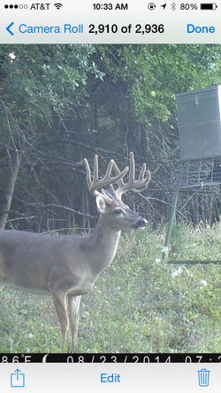 Trophy Whitetail Hunting East Texas