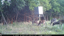 Trail Camera Photos