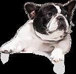 boxhead_dog02.png